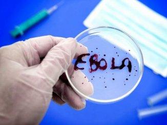 Эксперименты по созданию новых вирусов