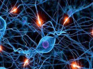 Вы верите в то, что нервные клетки не восстанавливаются?