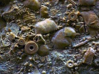 На Камчатке найден механизм возрастом 400 млн лет!