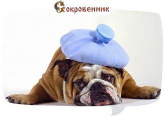 Скорая помощь при боли в голове