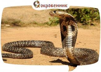 Змеиная символика и спиралевидное движение в древности
