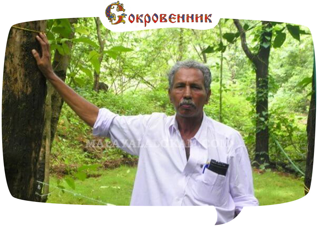 Абдул Карим и его «священная роща»