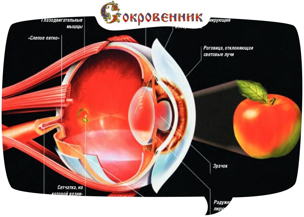 Наше зрение под другим углом зрения!