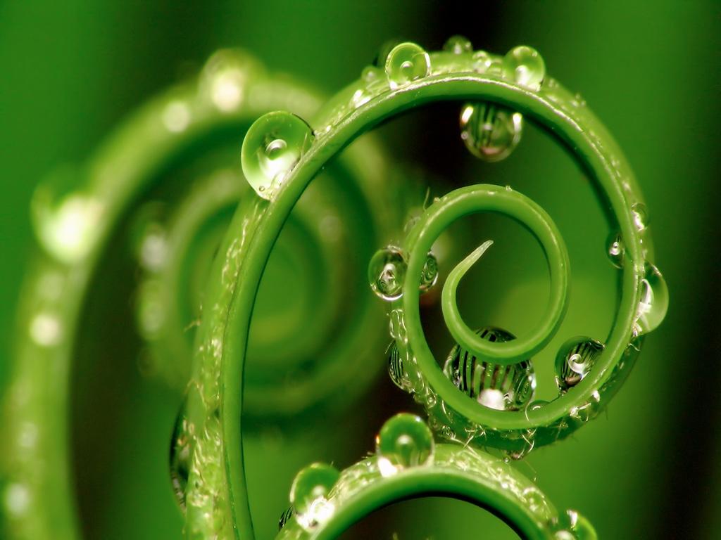 Спираль – основа жизни