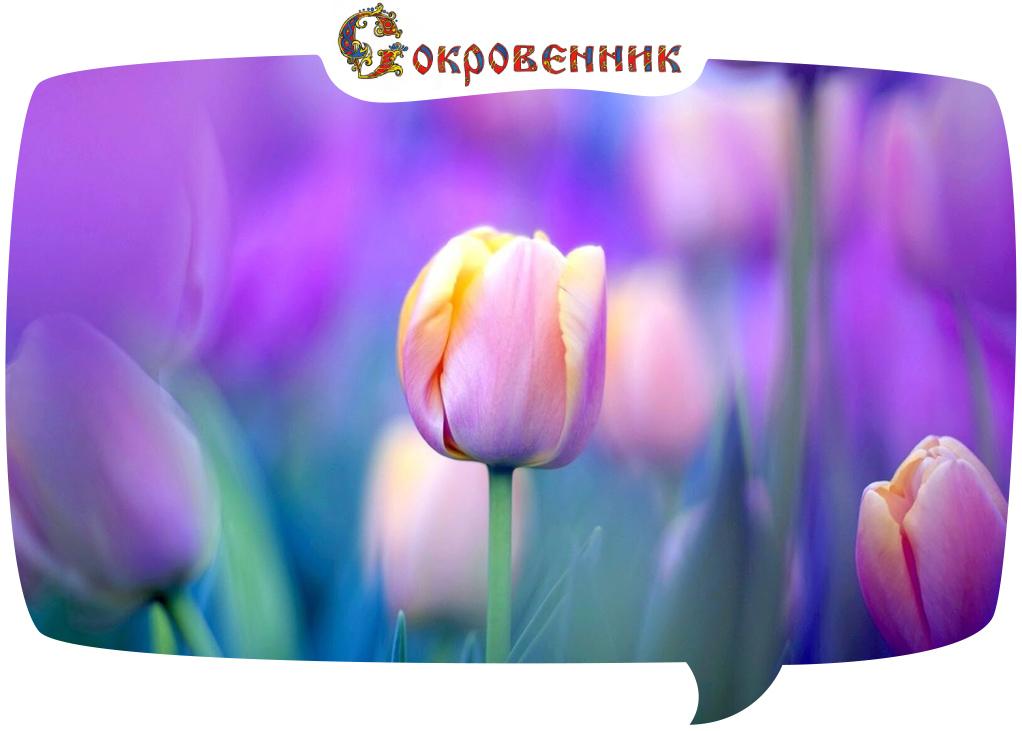 Тюльпан – цветок Всевышнего